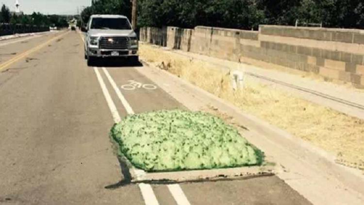 كتل خضراء تثير الرعب على الطرقات في الولايات المتحدة