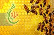 باحثون يكشفون سر نشاط النحل الدائم