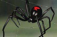 علماء يُحذّرون من عنكبوت