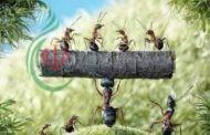 عجائب الموت عند النمل