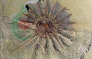 إكتشاف وحش بحري عمره 520 مليون سنة