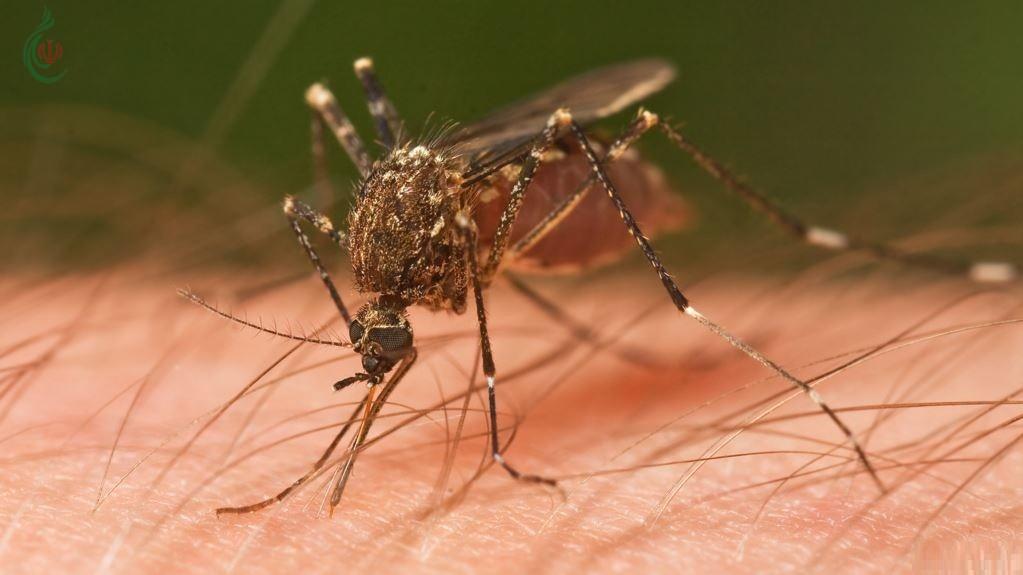 نادر و مميت .. بعوض يحمل فيروساً خطيراً في ولاية أميركية
