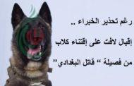 رغم تحذير الخبراء .. إقبال لافت على اقتناء كلاب من فصيلة
