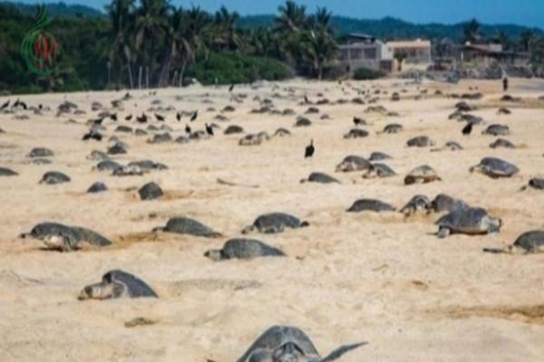 عودة السلاحف وأسماك القرش إلى سواحل تايلاند