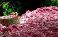 مراسم صناعة ماء الورد في إيران