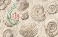 علماء يكتشفون حفريات فطرية عمرها 630 مليون عام جنوب غربي الصين